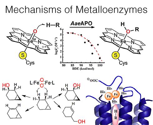 mechanisms-of-metalloenzymes-490x400